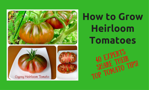 how to grow heirloom tomatoes 40 experts share their top tomato tips back to my garden. Black Bedroom Furniture Sets. Home Design Ideas